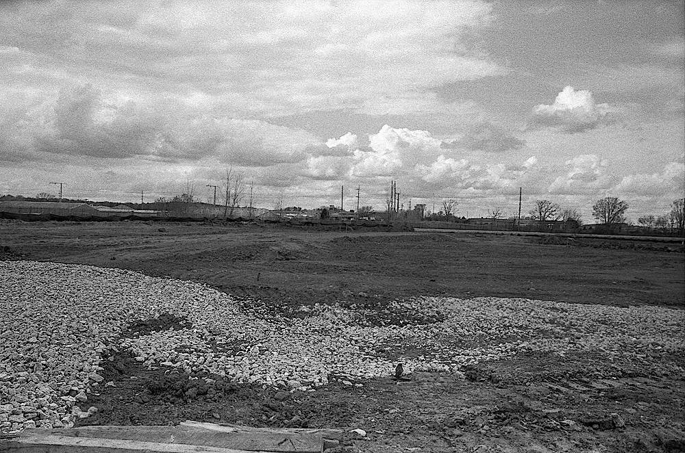 A black and white of a destroyed prairie and a lone robin searching for its old home.