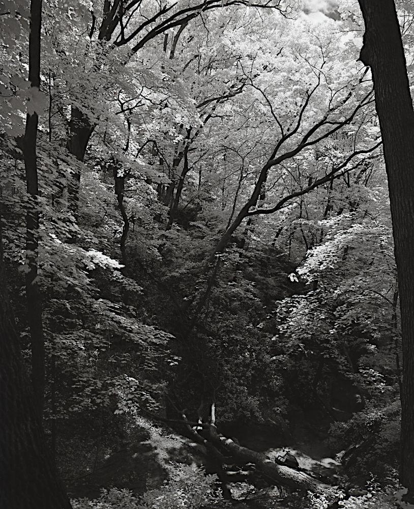 A wealth of brilliant white in the monochrome leaves over a dark ravine.